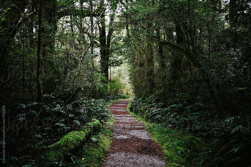 forest trail in New Zealand by Cameron Zegers for Stocksy United