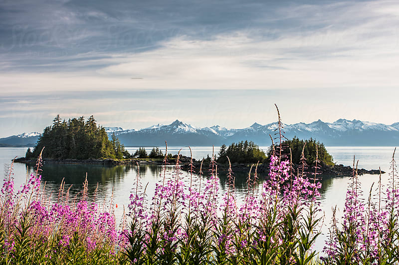 Coastline with islands, snow-covered mountains and blooming fireweed flowers by Mihael Blikshteyn for Stocksy United