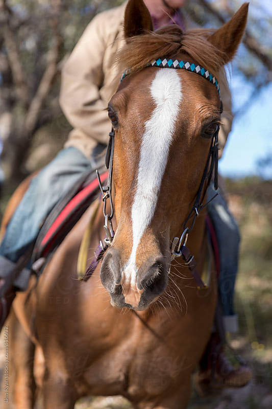 Tan horse with white face stripe looking to camera with senior male on saddle by Ben Ryan for Stocksy United