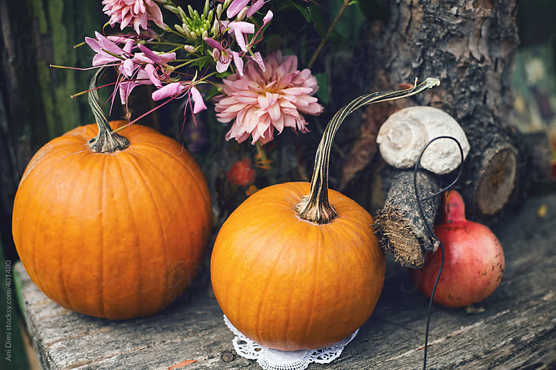 Pumpkins by Ani Dimi for Stocksy United