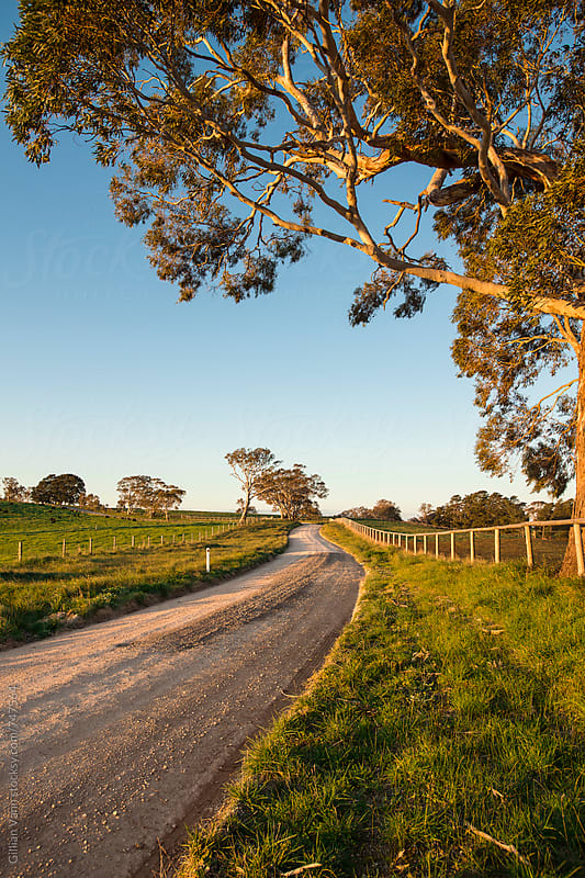 country road in south australia, late afternoon by Gillian Vann for Stocksy United