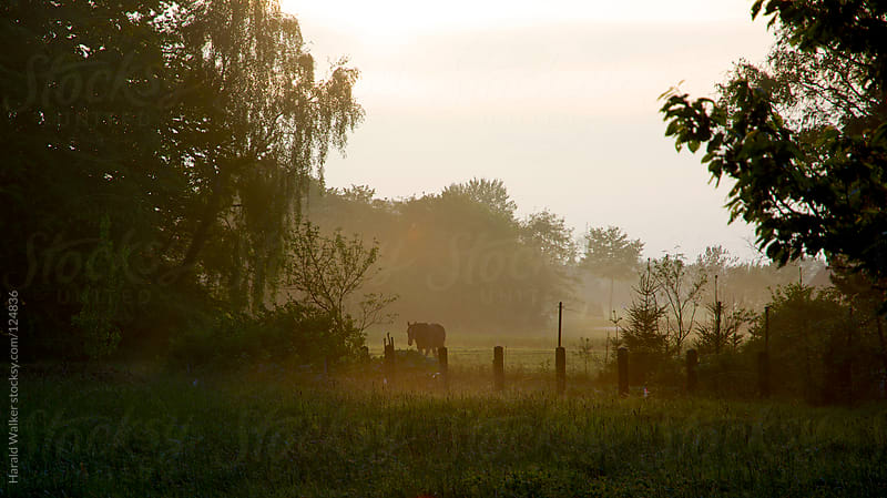 Meadow with horse by Harald Walker for Stocksy United