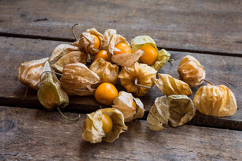 Ripe Physalis  by Paul Phillips for Stocksy United