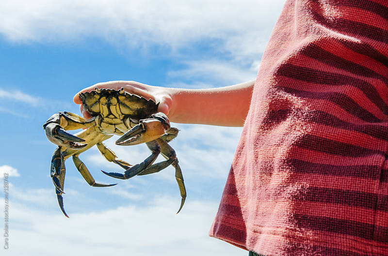Child holds a large green crab by Cara Dolan for Stocksy United