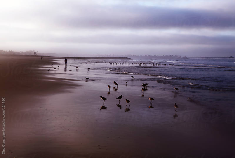 Beach with birds and people at sunset by Dina Giangregorio for Stocksy United