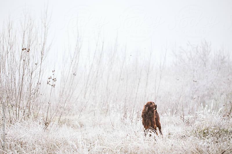 Dog walking by Mark Korecz for Stocksy United