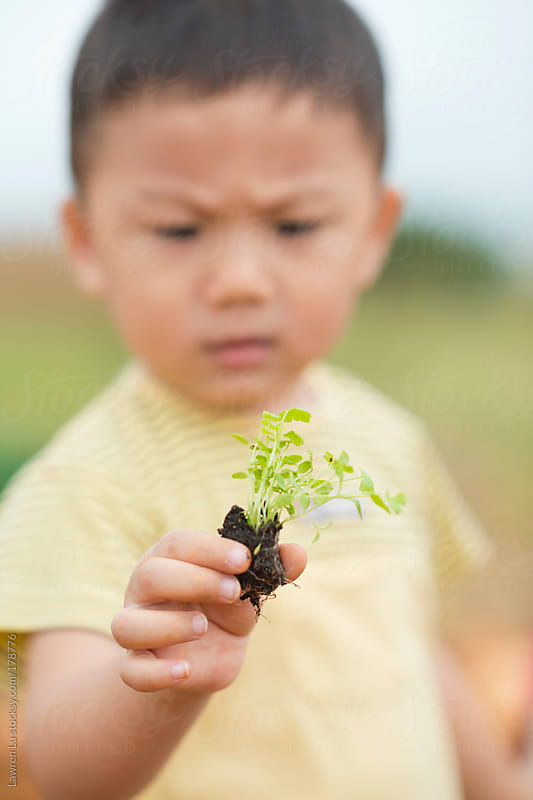 Kid holding and staring at celery seedlings by Lawren Lu for Stocksy United