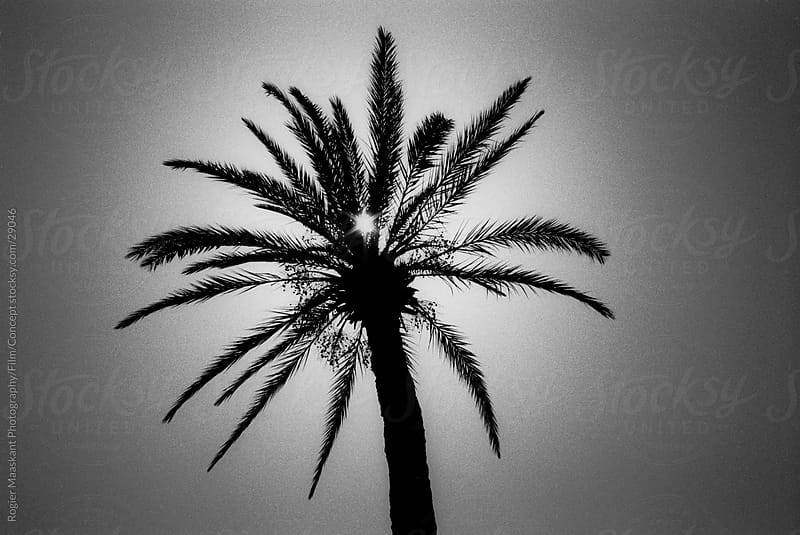 Palm Tree by Rogier Maaskant Photography/Film/Concept for Stocksy United