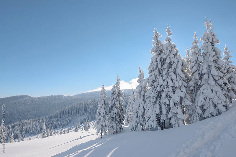 Landscape with forest of frozen fir trees  by RG&B Images for Stocksy United