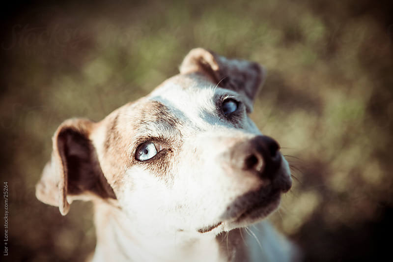 Dog staring at camera by Lior + Lone for Stocksy United