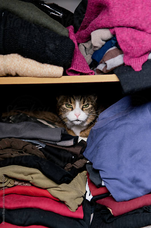 Cat in a closet by Alessio Bogani for Stocksy United
