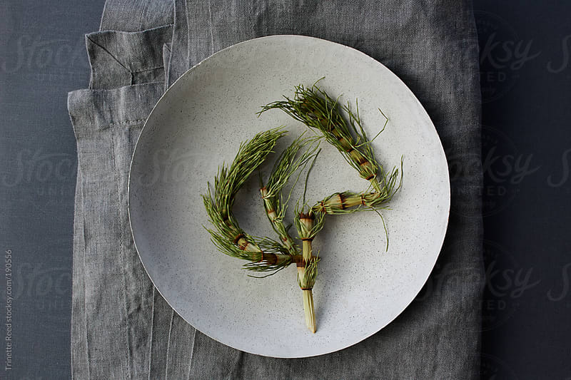 Horsetail plant inside of concrete bowl on linen.  by Trinette Reed for Stocksy United