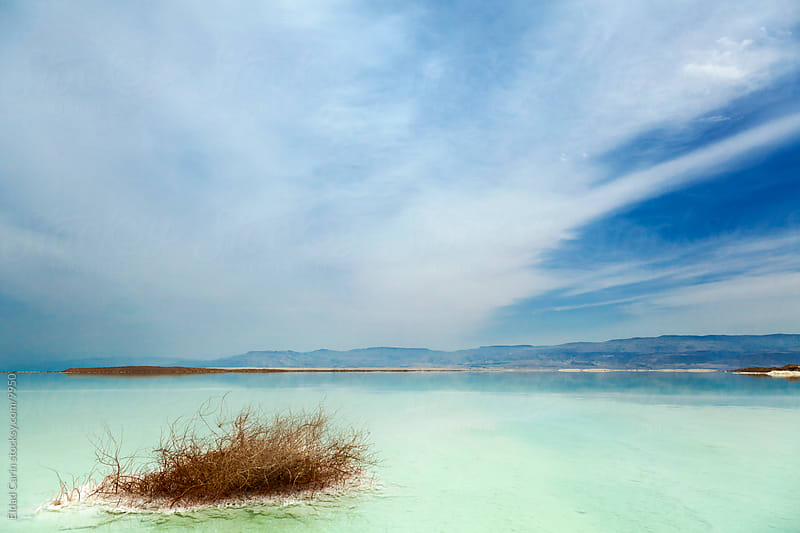 Withered Bush in Dead Sea Scenics by Eldad Carin for Stocksy United