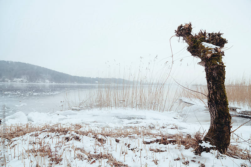 Frozen lake Wallersee landscape in austria in winter by Robert Kohlhuber for Stocksy United