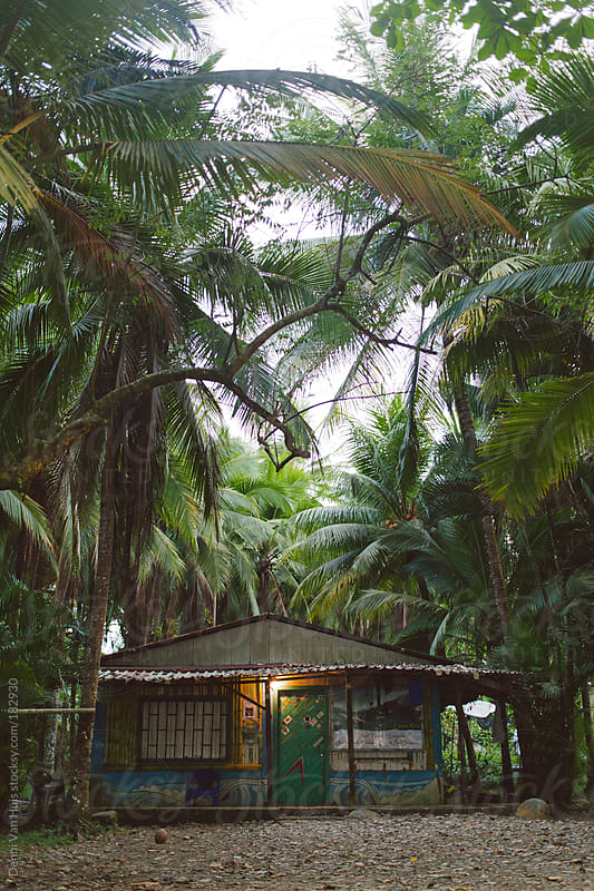 Beach shack in palm tree forrest. by Denni Van Huis for Stocksy United