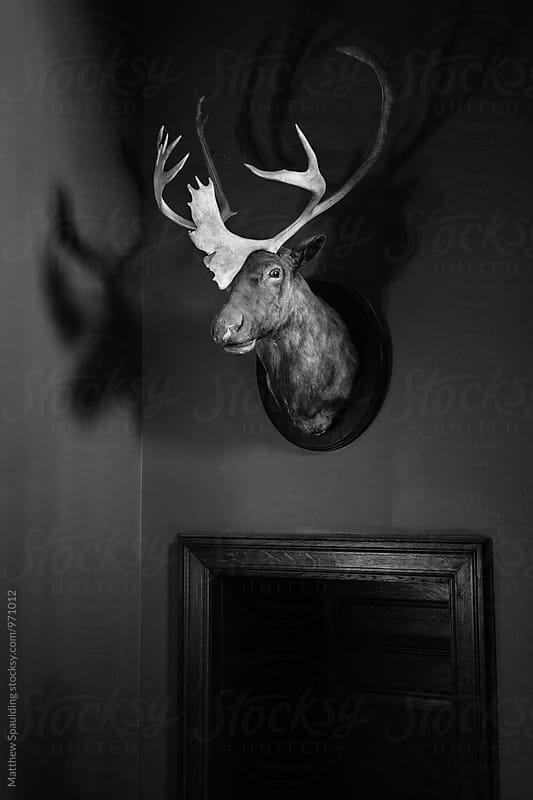 Trophy animal deer head mount on wall by Matthew Spaulding for Stocksy United