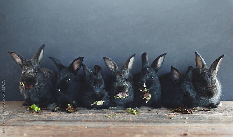 Bunny Babies by Melanie DeFazio for Stocksy United