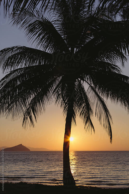 Palm tree on the beach at sunrise by michela ravasio for Stocksy United