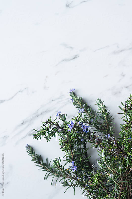 bouquet of rosemary on a plain marble background by Gillian Vann for Stocksy United