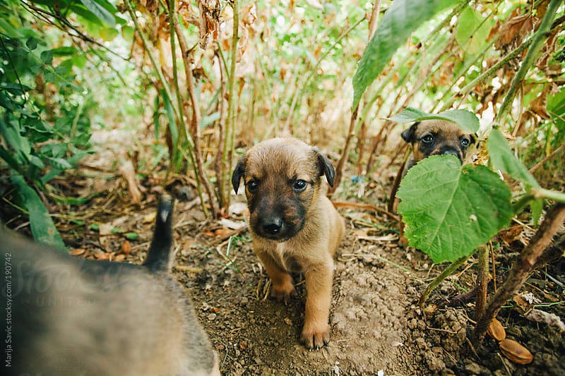 Puppies in the forest by Marija Savic for Stocksy United