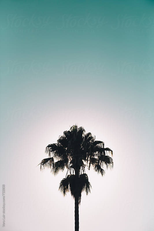 Palm tree silhouette by Vera Lair for Stocksy United