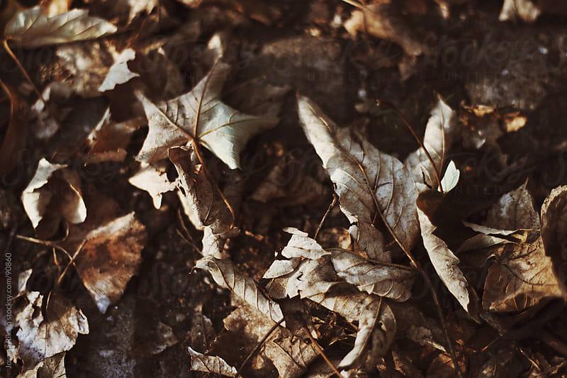 Leaves in garden by Jovana Rikalo for Stocksy United