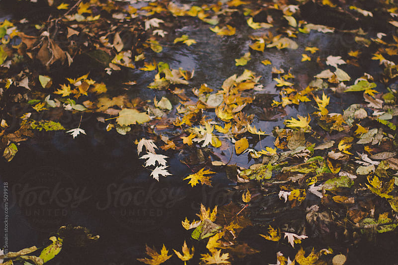 Leaves on water by Kim Swain for Stocksy United