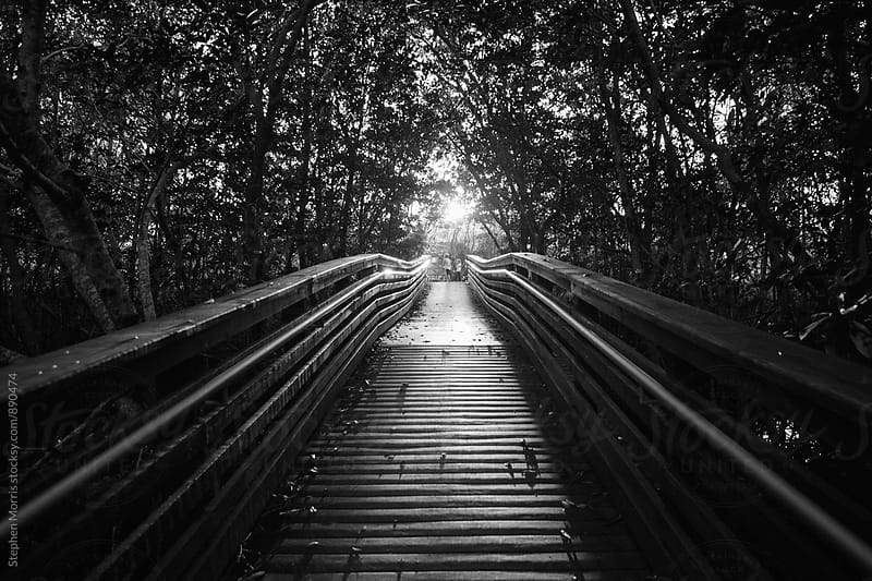 A Boardwalk Leading Through Trees by Stephen Morris for Stocksy United
