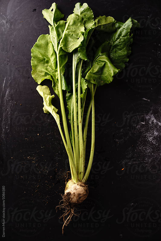 White beetroot on dark background. by Darren Muir for Stocksy United