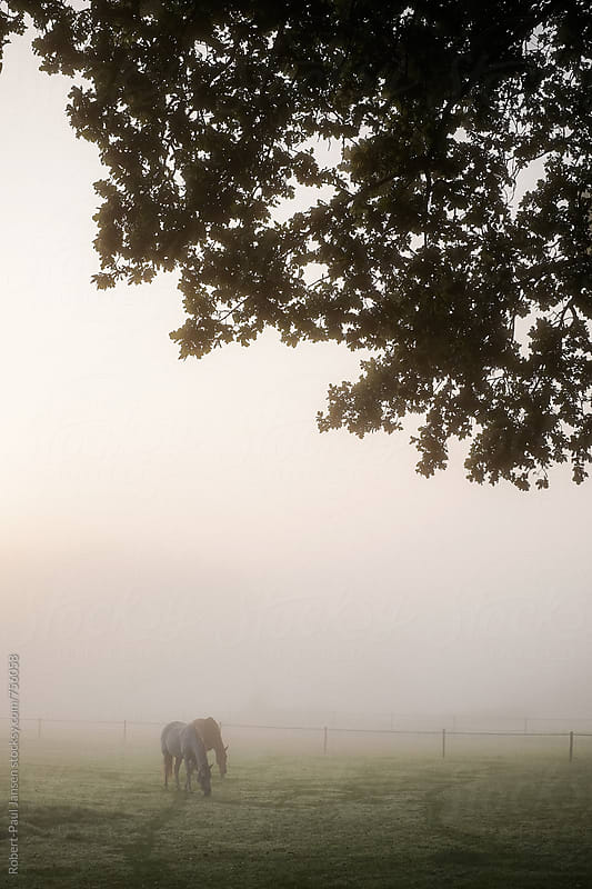 Horses in mist by Robert-Paul Jansen for Stocksy United