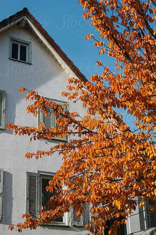 Autumn leaves on a tree beside a German house. by Holly Clark for Stocksy United