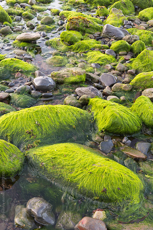 Mossy stones on a beach by Marilar Irastorza for Stocksy United