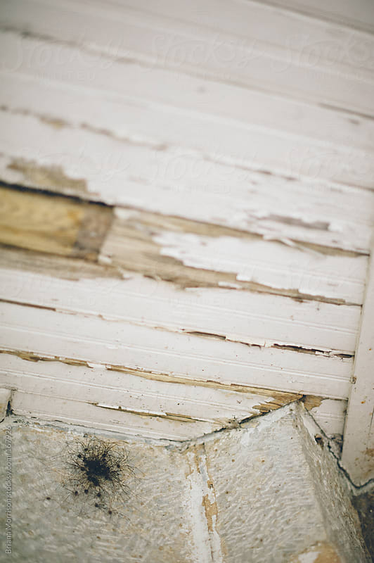 Group of Spiders and Wood Wall with Distressed White Paint by Briana Morrison for Stocksy United