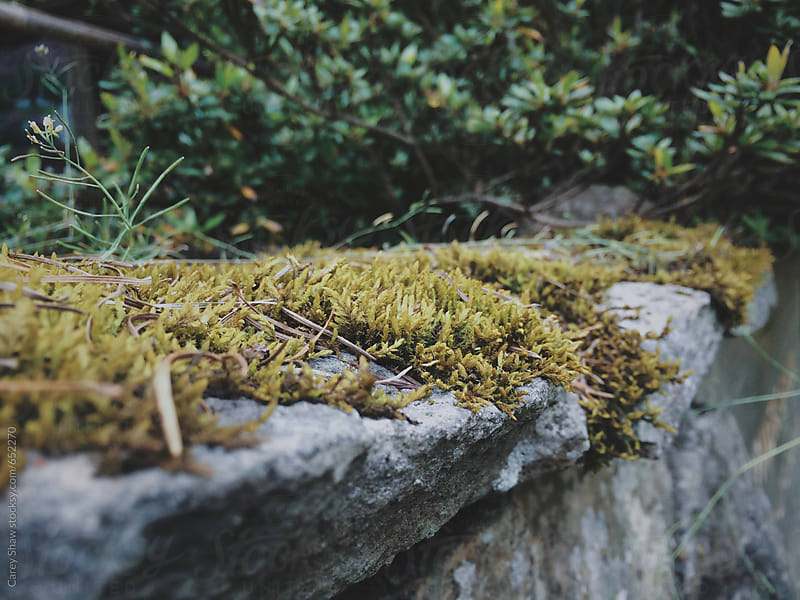 Detail of moss growing on rock by Carey Shaw for Stocksy United