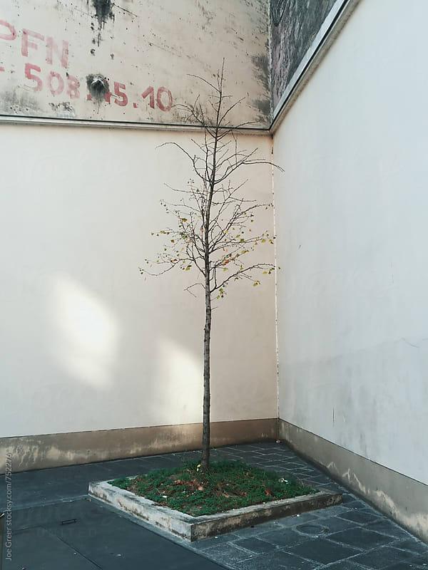 Tree  by Joe Greer for Stocksy United