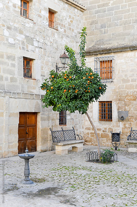 Spanish square with orange tree by Bisual Studio for Stocksy United