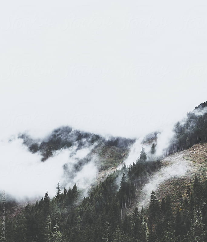 Foggy Forest in the Mountains of British Columbia by Luke Gram for Stocksy United