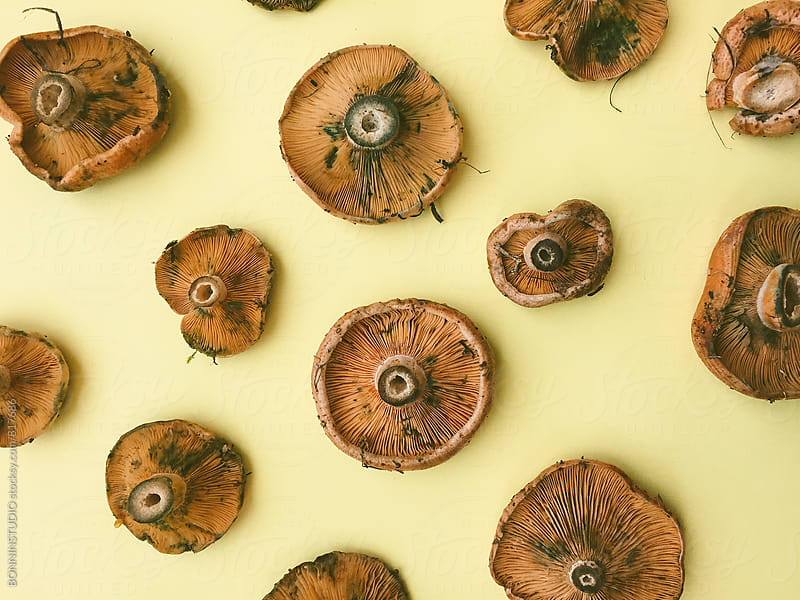 Overhead of mushrooms on yellow background. by BONNINSTUDIO for Stocksy United