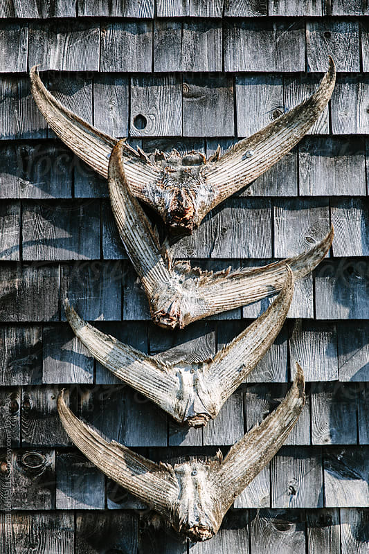 Tuna Tails on Fishing Shack  by Raymond Forbes LLC for Stocksy United