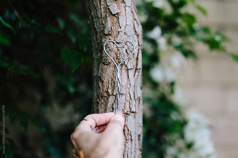 Woman's hand holding a handmade wire heart shape against a skinny tree trunk.  by Jacqui Miller for Stocksy United