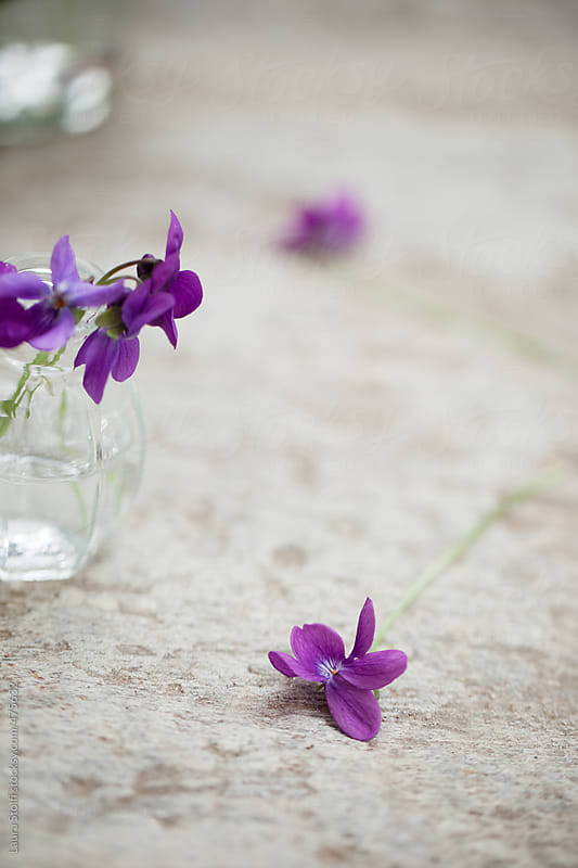 Springtime: wild violets bouquet in glass jar on stone pavement by Laura Stolfi for Stocksy United