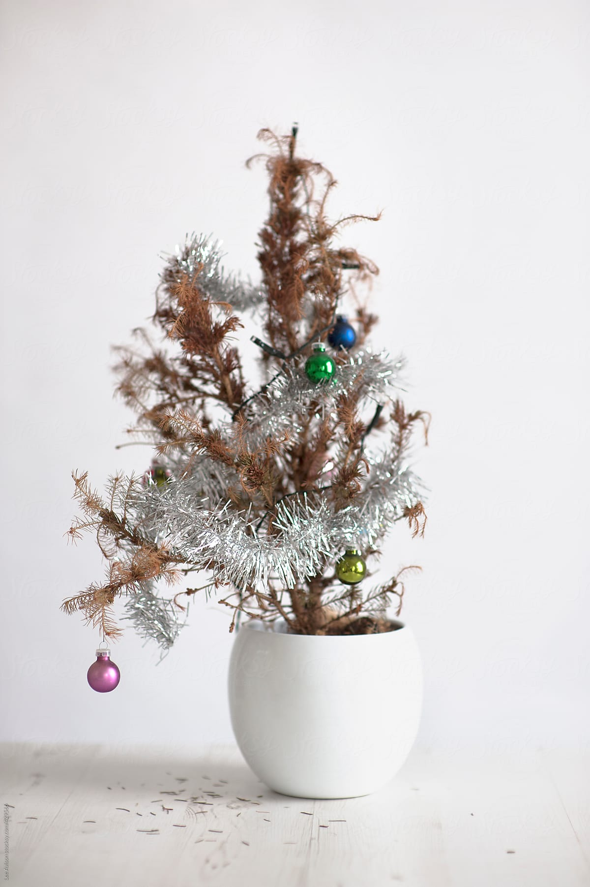 miniature dead christmas tree by lee avison for stocksy united