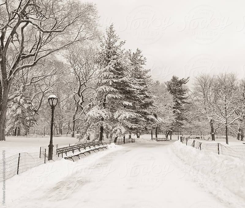 Central Park Winter - Snow-covered Path by Vivienne Gucwa for Stocksy United