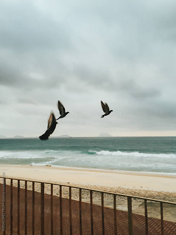 Three Birds Taking off on Stormy Beach by VISUALSPECTRUM for Stocksy United