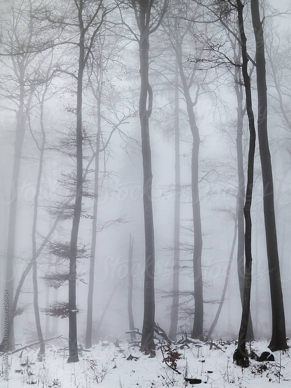 Foggy Winter Forest with Snow by Andreas Wonisch for Stocksy United