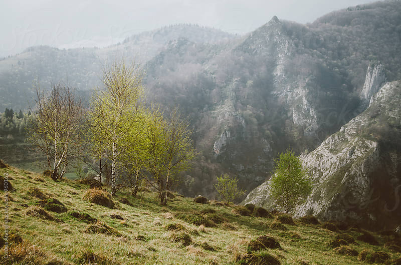 Spring time in the mountains by Cosma Andrei for Stocksy United