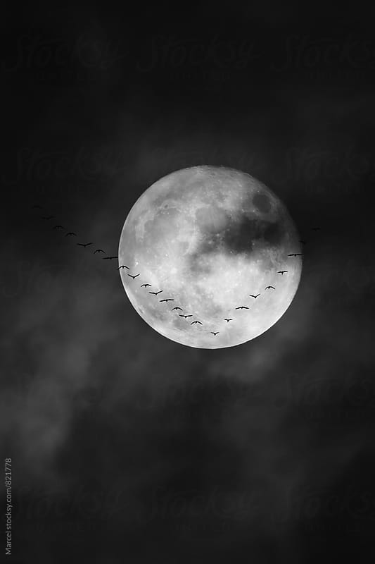 Geese and full moon by Marcel for Stocksy United