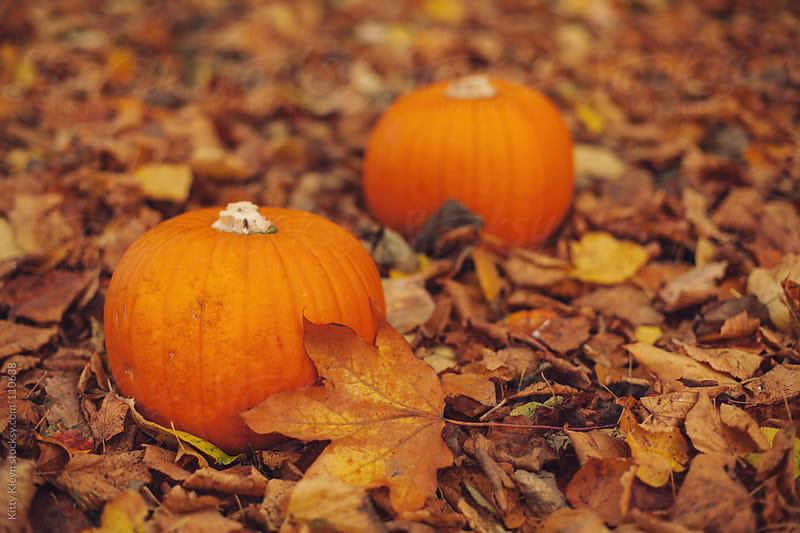Pumpkins in the autumn by Kitty Kleyn for Stocksy United