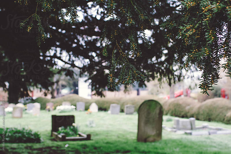 A Yew Tree in a graveyard by Helen Rushbrook for Stocksy United