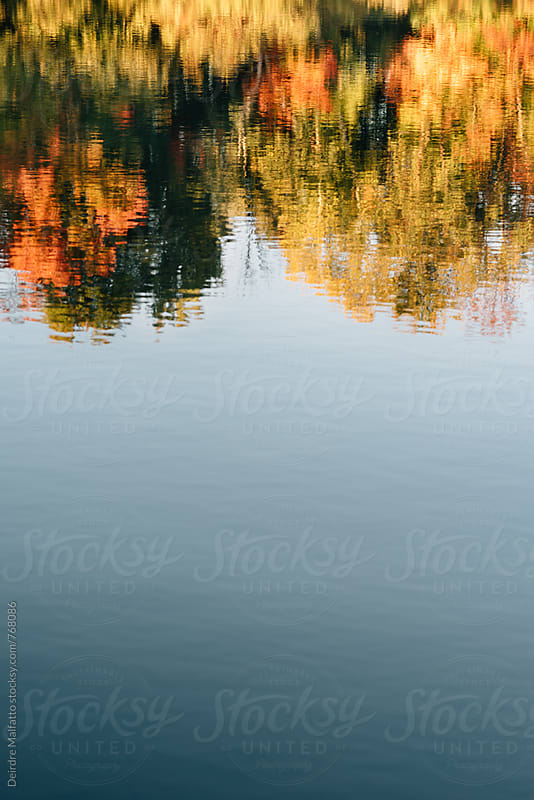 pond reflecting autumn leaves and blue sky by Deirdre Malfatto for Stocksy United